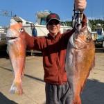 4/25 最新釣果情報!と新規入会!などなど!!真鯛、ブリ、ヒラマサ、ハマチ、ムシガレイ、ホウボウ、レンコ鯛、甘鯛などなど・・・・・。